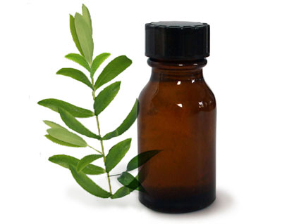 Tea Tree Oil and Leaves